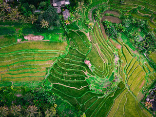 Garden Poster Rice fields Aerial view stairs rice plantation in bali, Indonesia.