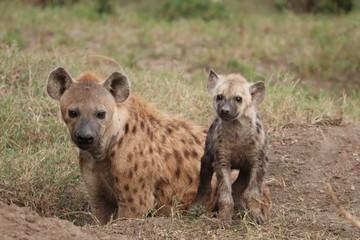 Fotobehang Hyena Spotted hyena cub and his mom by the den, Masai Mara National Park, Kenya.