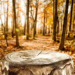 Autumn background of free space for your decoration.