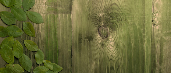 Obraz Leaves on dark green wooden table. Ecological concept. Top view. - fototapety do salonu