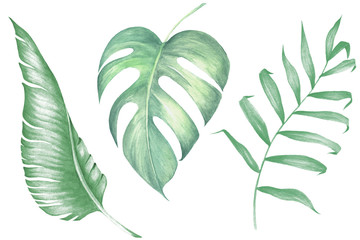 Watercolor tropical collecton. Palm, banana and monstera leaves with tropical flowers. Wall mural