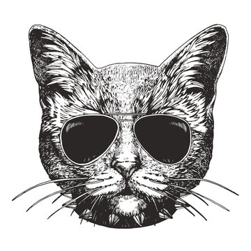 Portrait of Cat with sunglasses and collar. Hand-drawn illustration. Vector
