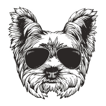Portrait of Yorkshire Terrier Dog with sunglasses. Hand-drawn illustration. Vector