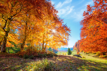 Spoed Foto op Canvas Herfst Landscape of Autumnal forest with real sun and orange trees on meadow