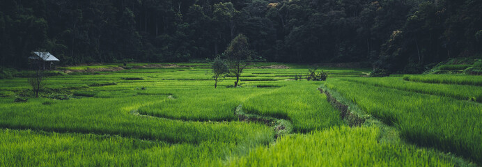 Recess Fitting Gray traffic Paddy field In the countryside Rice fields in asia