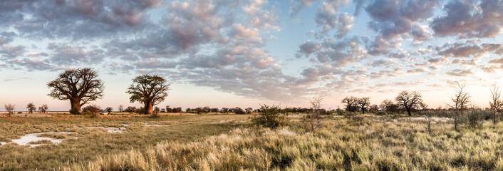 Photo sur Plexiglas Baobab Botswana baobab panorama