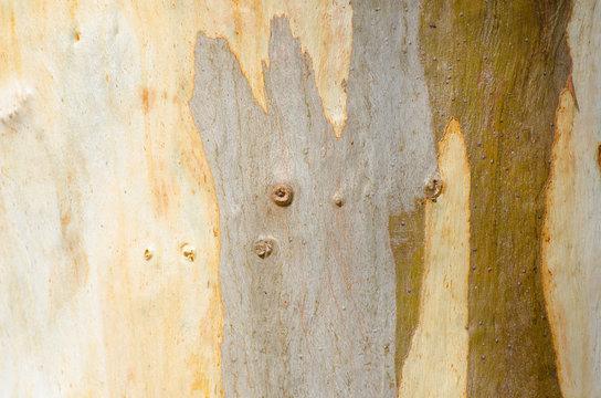Close up Australian tree bark pattern and texture
