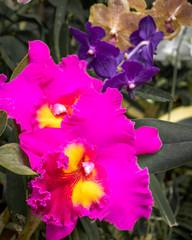Garden Poster Pink beautiful pink orchid flower