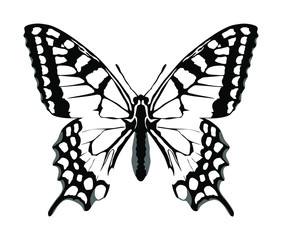 Monarch Butterfly vector with open wings in a top view. Flying migratory insect. Butterflies represents symbol of summer and the beauty of nature. Butterfly art symbol illustration and tattoo sign.
