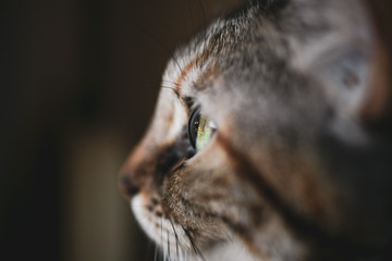 Beautiful cat portrait. Close up view of cat eye.   Wall mural