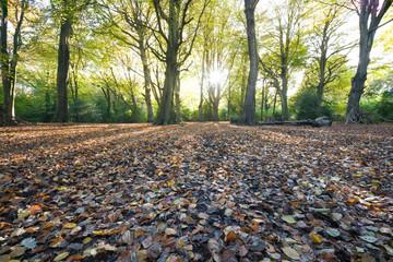 Autumn at Borthwood Copse, Arreton, Isle of Wight