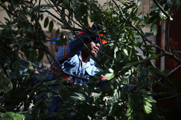 A worker cuts tree branches in preparation for Storm Dorian in Santo Domingo