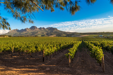 Beautiful landscape of Cape Winelands, wine growing region in South Africa Wall mural