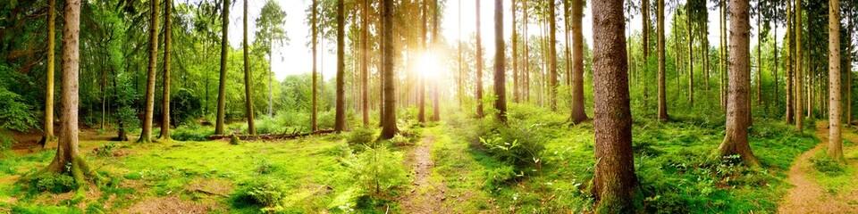 Helles Waldpanorama im Licht der aufgehenden Morgensonne, die durch die Bäume scheint Wall mural