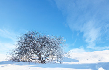 Beautiful winter landscape with a snowy tree on a white hill on a frosty sunny day. Natural winter background