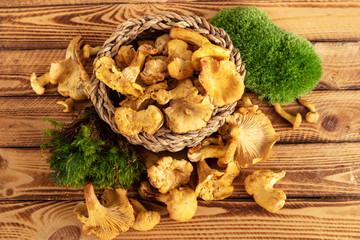 Mushrooms chanterelles on wooden background. Rustic design.