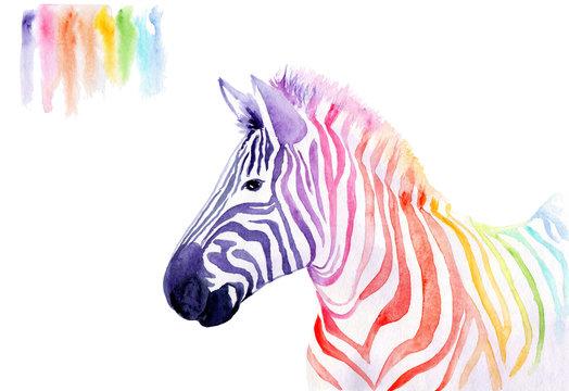 watercolor drawing of an animal - rainbow zebra