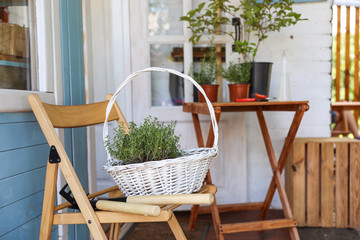 White basket with seedlings and gardening tools on wooden chair near house