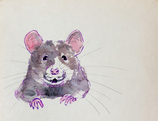 rat, watercolor sketch, portrait