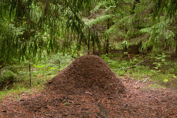 Big ant hill in the summer forest.