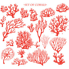 Set of underwater coral reef elements