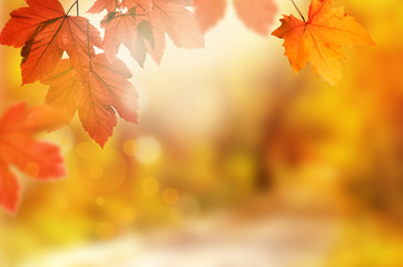 Falling yellow leaves and grass bokeh background with sun beams. Wall mural