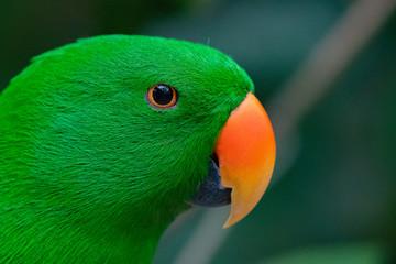 Fotobehang Papegaai Parakeet