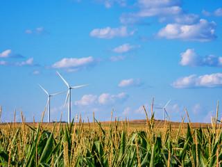 Wall Murals Blue Kansas Corn Field Energy