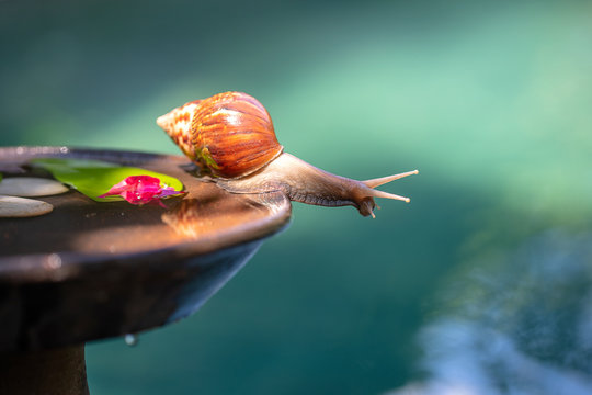 A snail in a shell crawls on a ceramic pot with water, summer day in garden, close up, Bali, Indonesia