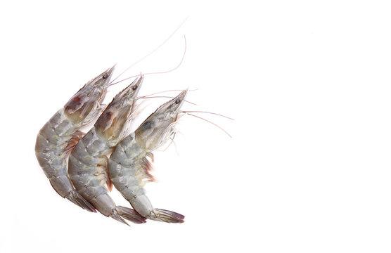 Raw shrimp on white background