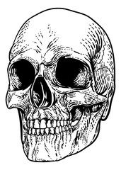 A skull graphic. Original illustration in a vintage engraving woodcut etching style.