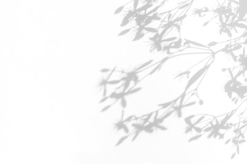 Overlay effect for photo. Gray shadows of delicate flowers on a white wall. Abstract neutral nature concept background. Space for text. Blurred, defocused.