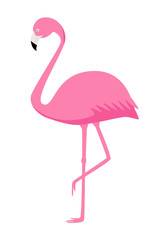 Pink Flamingo vector isolate on white background. Exotic bird.