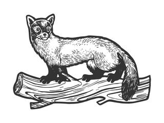 Marten animal sketch engraving vector illustration. Tee shirt apparel print design. Scratch board style imitation. Black and white hand drawn image. Wall mural