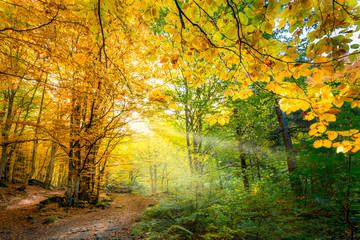 Foto op Canvas Meloen Two colors of autumn season in wild forest