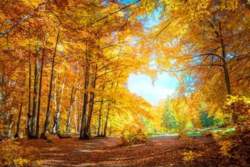 Fotobehang Bomen Heart of Autumn - yellow orange trees in forest with heart shape