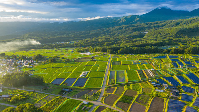 Japanese paddy field scenery shining in the sunset