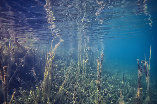 mangroves underwater landscape background / abstract bushes and trees on the water, transparent water nature eco