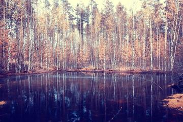 landscape in the autumn park / concept nature seasonal landscape season, autumn, forest, trees Indian summer