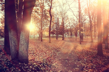autumn park sun landscape / seasonal autumn landscape in a yellow park, sun rays at sunset in October
