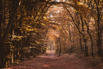 Recess Fitting Magenta Path trail in the autumn forest tunnel of light