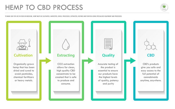 Hemp to CBD Process horizontal business infographic illustration about cannabis as herbal alternative medicine and chemical therapy, healthcare and medical science vector.