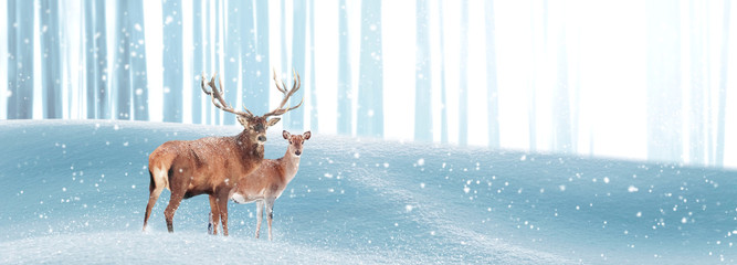 Wall Mural - Noble deer in a winter magic forest. Christmas fantastic image. Copy space. Winter wonderland. Banner format.