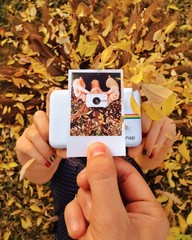 polaroid  camera and photo in fall leaves