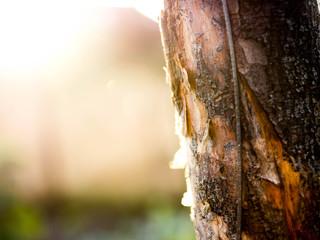 Fototapeta Zbliżenie na korę drzewa obraz