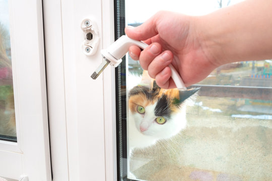 A man holds in his hand a broken doorknob. The cat looks in surprise from the window opening.