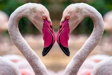 Garden Poster Flamingo Flamingo Herz