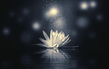 Garden Poster Lotus flower monochrome lotus reflection light sparkle
