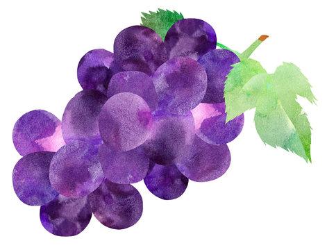 ぶどう・紫