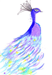 A Hand Painted Watercolor Illustration Of A Colorful Peacock